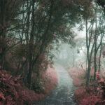juan espinel forest