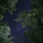 llanos colombia espinelcaicedo